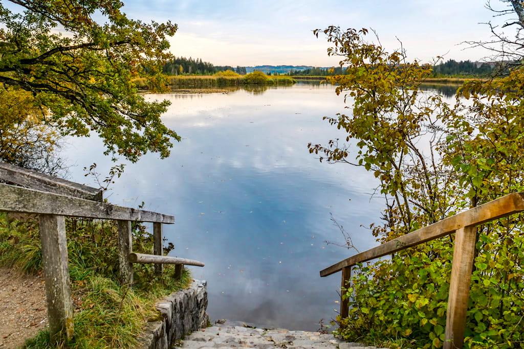 Naturschutzgebiet Maisinger See im Herbst - 3 Seen Wanderung Starnberger See - Maisinger See - Ammersee - Bayern Highlights