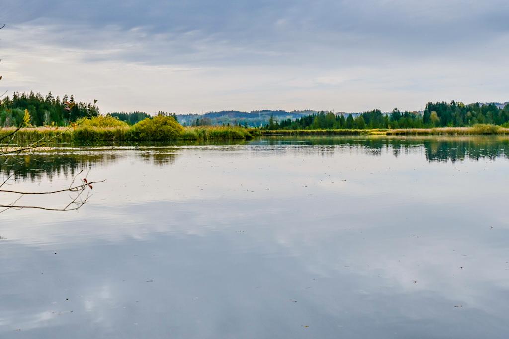 Maisinger See Wanderung zwischen Starnberger See und Ammersee - Naturschutz- & Vogelschutzgebiet - Bayern