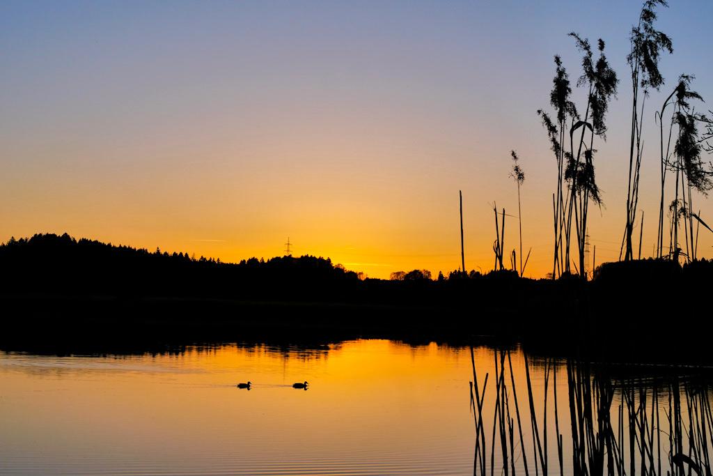 Der Maisinger See bietet wunderschöne Sonnenuntergänge - Bayern