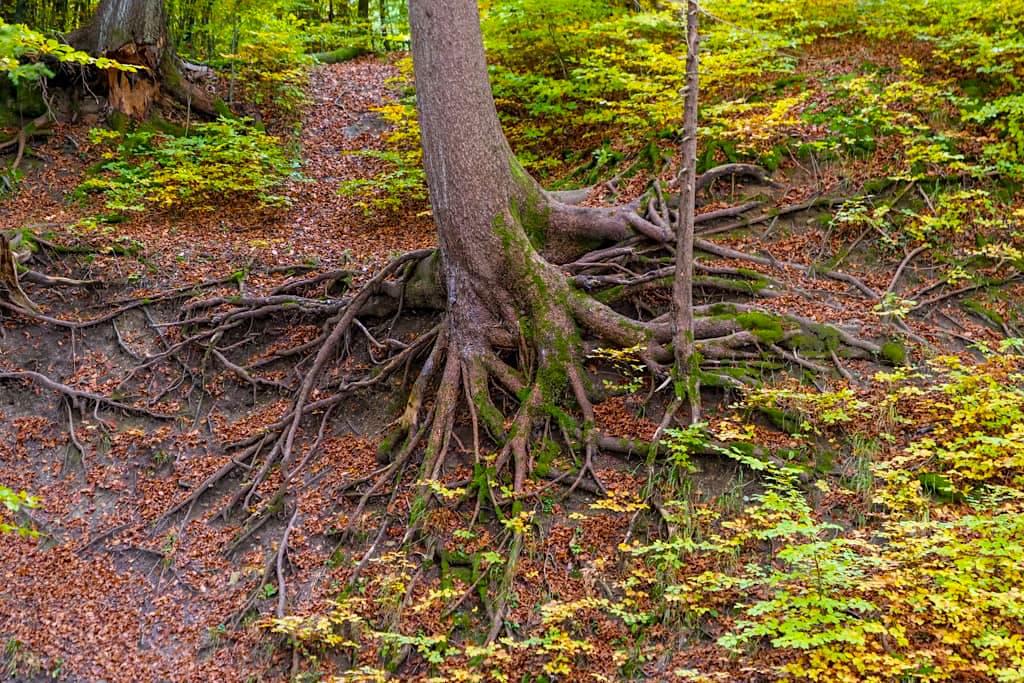 Grandiose Waldlandschaften im Naturschutzgebiet Maisinger See - Drei-Seen-Wanderung - Bayern