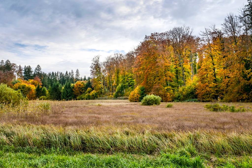 Faszinierende Sumpflandschaft im Herbst bei Aschering - Wanderung vom Starnberger See über den Maisinger See zum Ammersee - Bayern