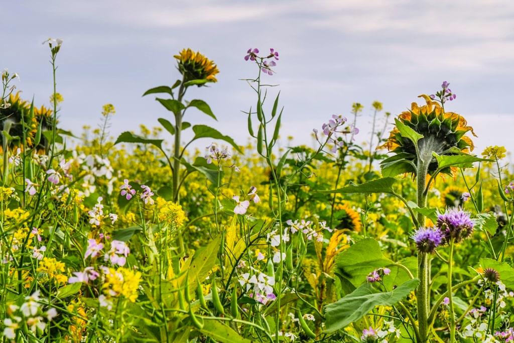 Wunderschön Blumenwiese beim Kloster Andechs - Wanderung vom Maisinger See zum Ammersee Bayern