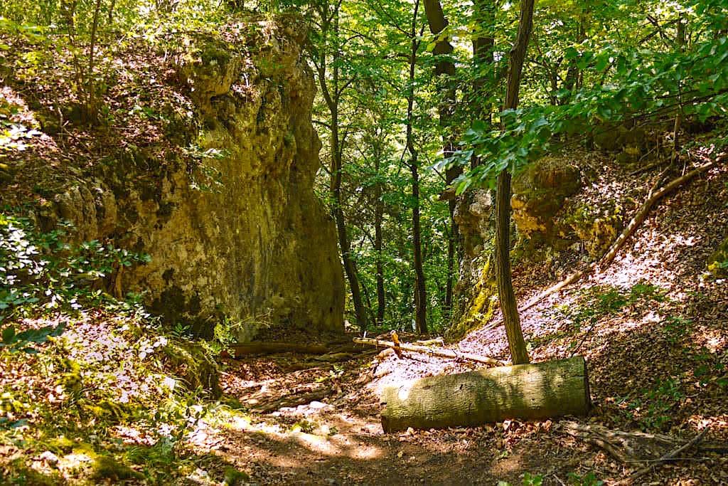 Waldweg auf der Donauroute - Wanderung von Kelheim zum Kloster Weltenburg - Bayern