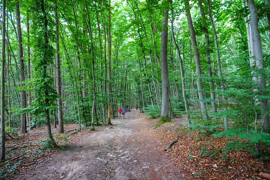 Waldweg vom Donaudurchbruch über die Lange Wand zum Kloster Weltenburg - Altmühltal, Bayern
