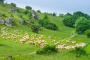 Schäferweg – Schönste Wanderung, beste Rieskrater-Einblicke