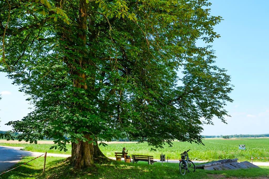 Riesiger Kastanienbaum - Ort der Stille bei der Kapelle Oberthürheim - Dillinger Land, Bayern
