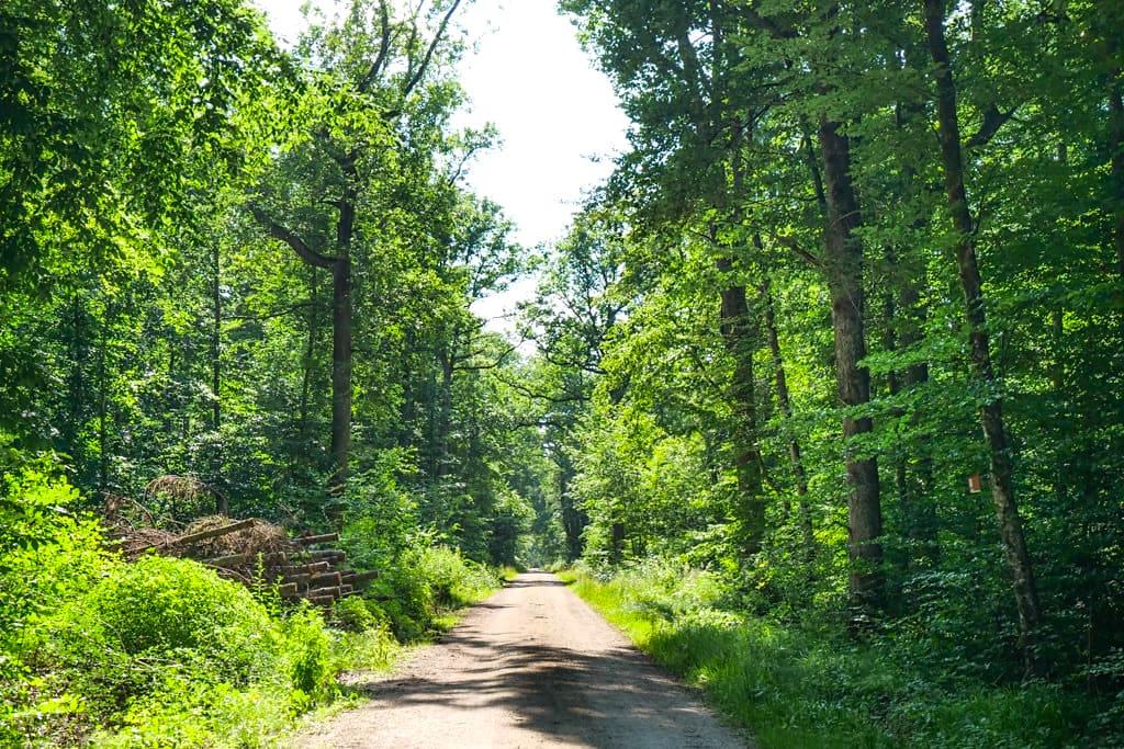 DonauTäler Radwege - Episodenraum Wildfang ist geprägt von Wäldern, Bächen & Lichtungen mit großartigen Ausblicken - Dillinger Land, Bayern